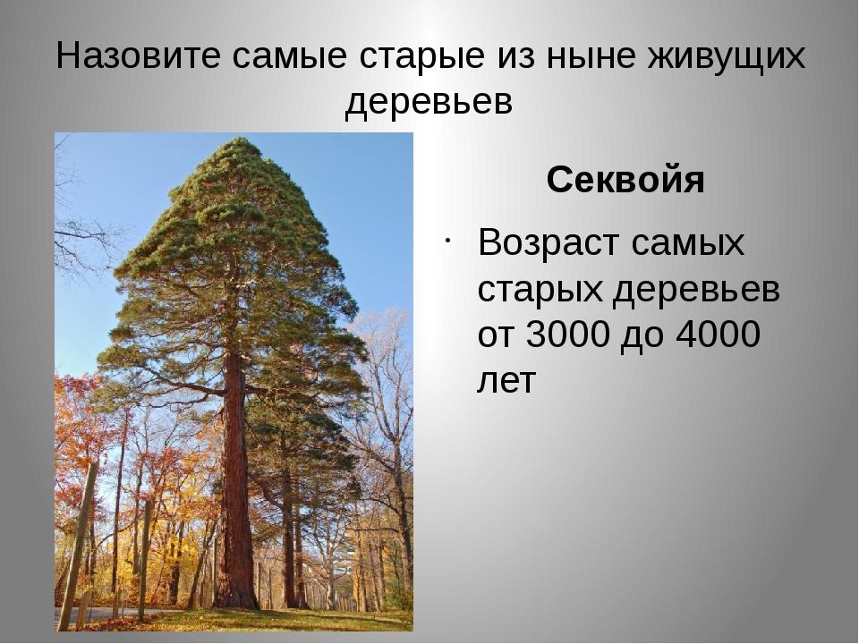 Назовите самые старые из ныне живущих деревьев Секвойя Возраст самых старых д...