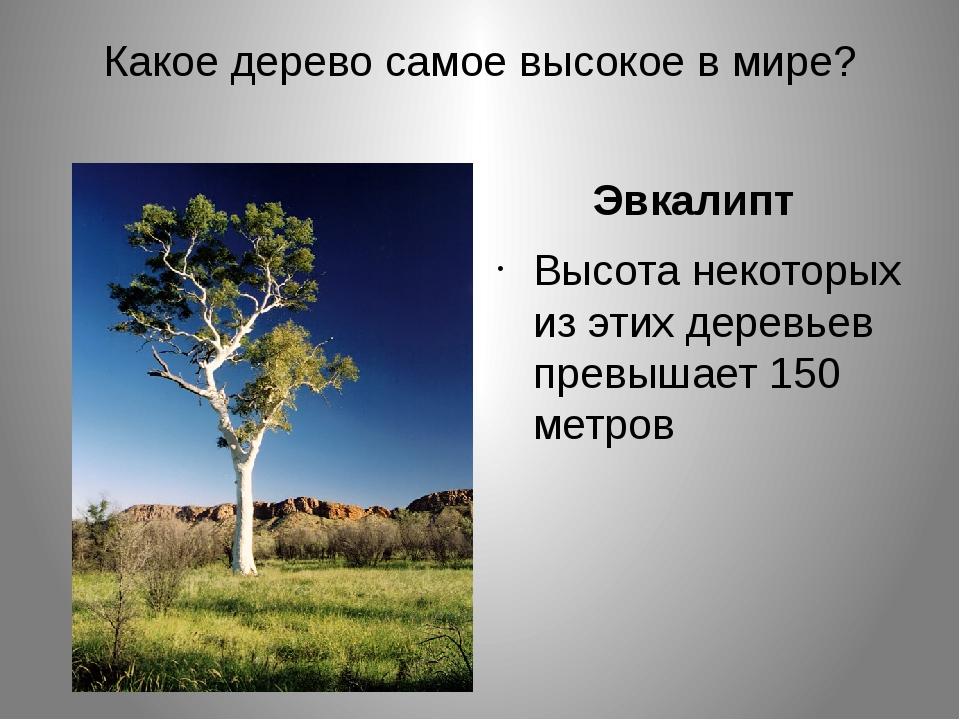 Какое дерево самое высокое в мире? Эвкалипт Высота некоторых из этих деревьев...