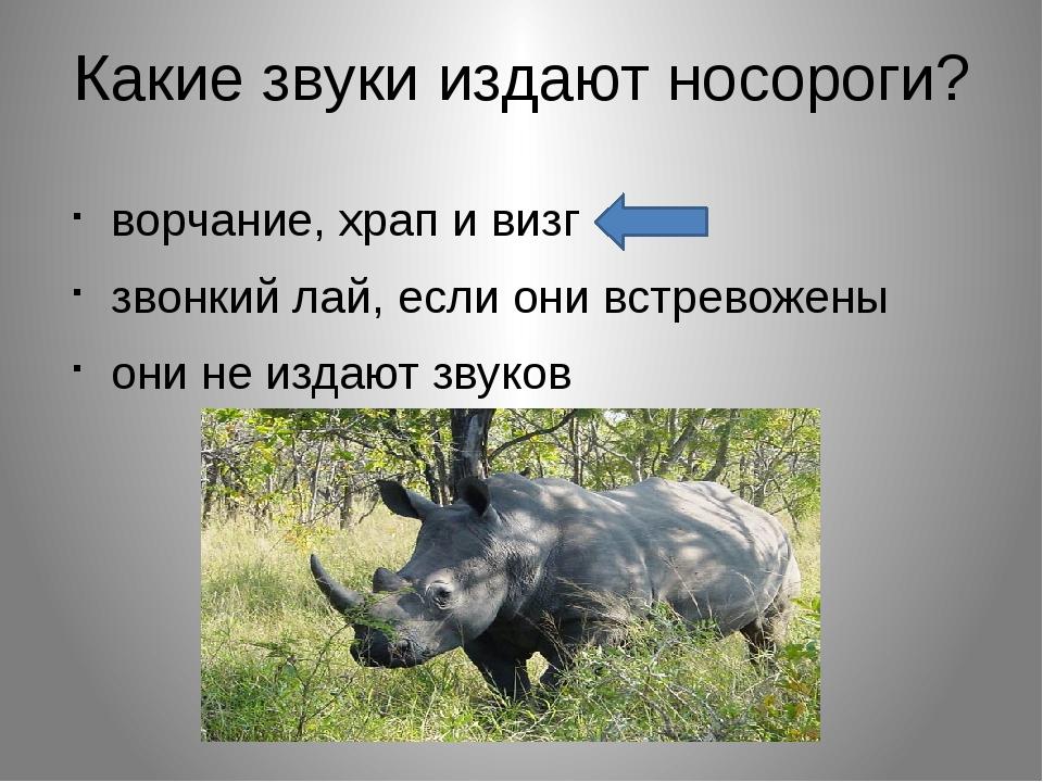 Какие звуки издают носороги? ворчание, храп и визг звонкий лай, если они встр...