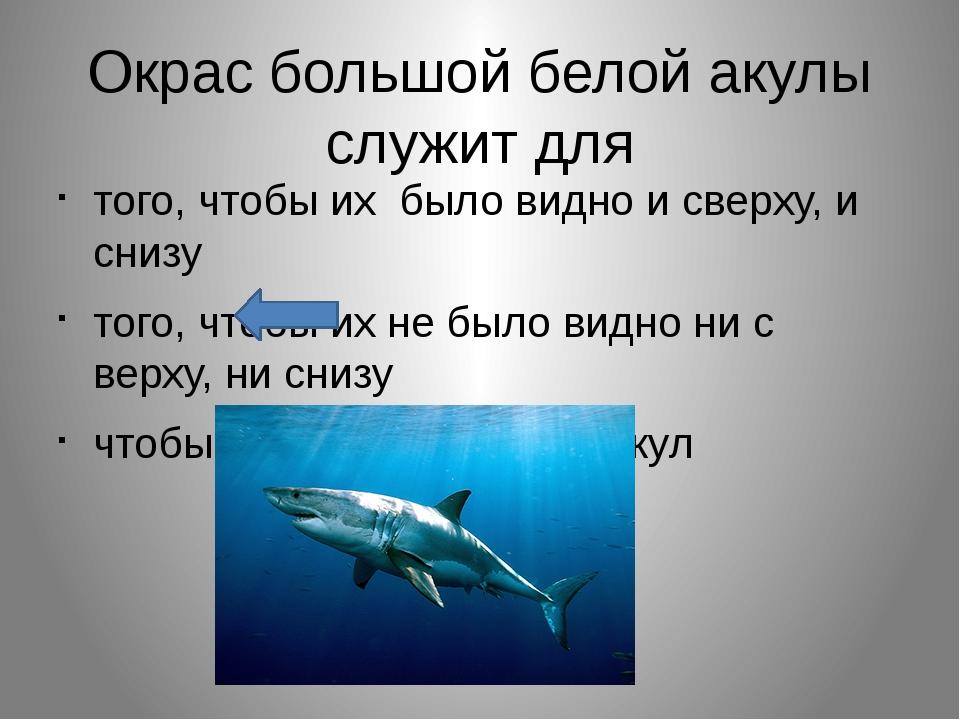 Окрас большой белой акулы служит для того, чтобы их было видно и сверху, и сн...