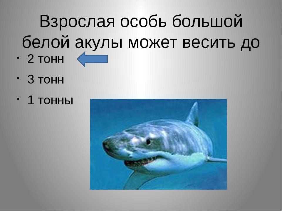 Взрослая особь большой белой акулы может весить до 2 тонн 3 тонн 1 тонны