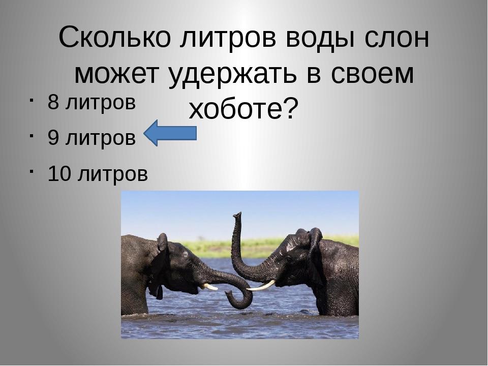 Сколько литров воды слон может удержать в своем хоботе? 8 литров 9 литров 10...