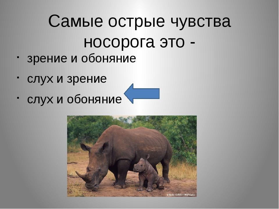 Самые острые чувства носорога это - зрение и обоняние слух и зрение слух и об...