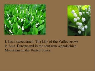 It has a sweet smell. The Lily of the Valley grows in Asia, Europe and in the