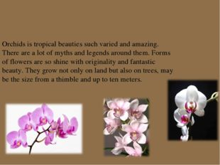 Orchids is tropical beauties such varied and amazing. There are a lot of myth