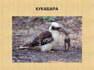 КУКАБАРА