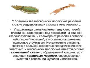 У большинства головоногих моллюсков раковина сильно редуцирована и скрыта в т