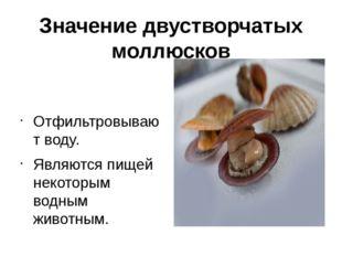 Значение двустворчатых моллюсков Отфильтровывают воду. Являются пищей некотор