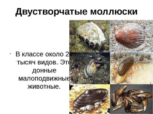 Двустворчатые моллюски В классе около 20 тысяч видов. Это донные малоподвижны...