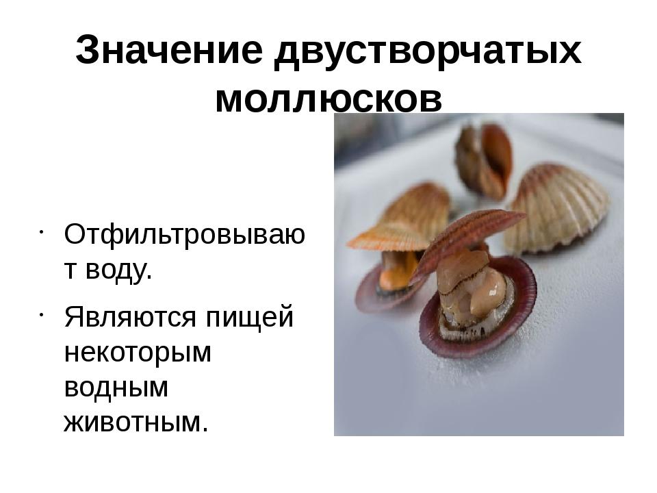 Значение двустворчатых моллюсков Отфильтровывают воду. Являются пищей некотор...