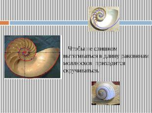 Чтобы не слишком вытягиваться в длину раковинам моллюсков приходится скруч