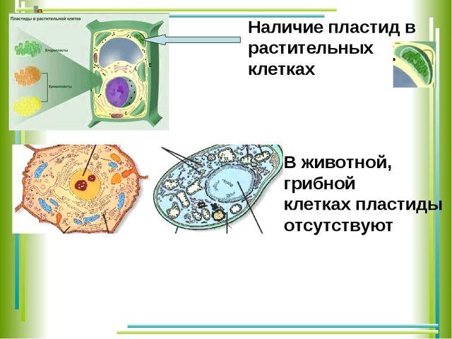 Наличие пластид в растительных клетках В животной, грибной клетках пластиды о...