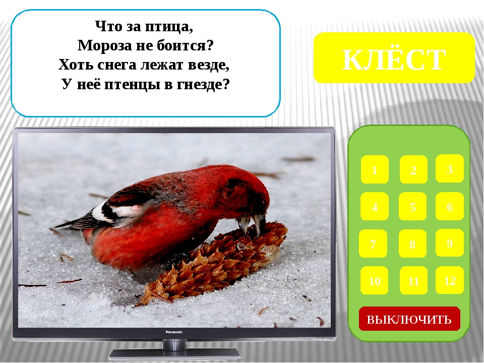 1 2 3 4 5 6 7 8 9 ВЫКЛЮЧИТЬ 12 11 10 Эта маленькая пташка Носит серую рубашк...