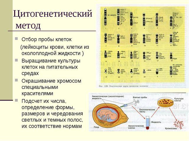 Цитогенетический метод Отбор пробы клеток (лейкоциты крови, клетки из околопл...