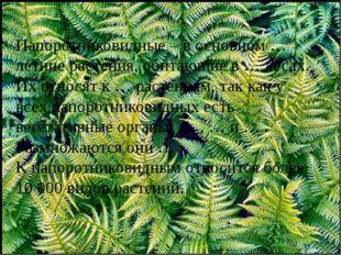Папоротниковидные – в основном … летние растения, обитающие в … лесах. Их отн