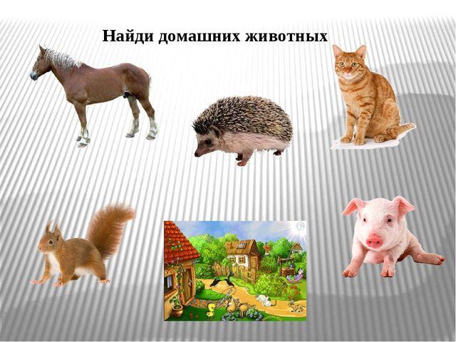 Найди домашних животных