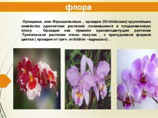 флора Орхидные, или Ятрышниковые , орхидеи (Orchidaceae)-крупнейшее семейство