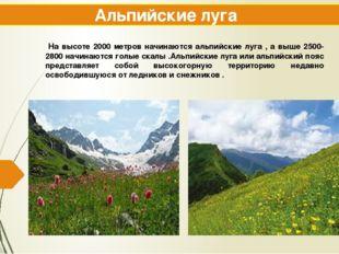 Альпийские луга На высоте 2000 метров начинаются альпийские луга , а выше 250