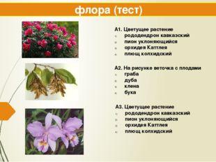 флора (тест) А1. Цветущее растение рододендрон кавказский пион уклоняющийся о