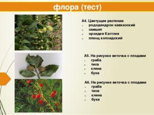флора (тест) А4. Цветущее растение рододендрон кавказский самшит орхидея Катт