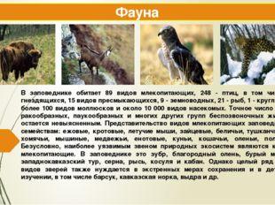В заповеднике обитает 89 видов млекопитающих, 248 - птиц, в том числе 112 гне