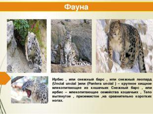 Ирбис , или снежный барс , или снежный леопард (Uncial uncial )или (Pantera u