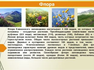 Флора Кавказского заповедника насчитывает 3 000 видов, из которых более полов