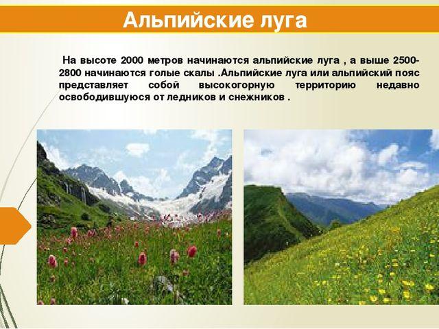 Альпийские луга На высоте 2000 метров начинаются альпийские луга , а выше 250...
