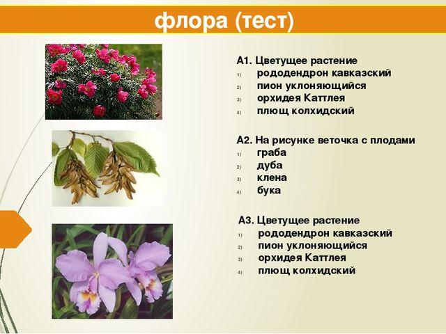 флора (тест) А1. Цветущее растение рододендрон кавказский пион уклоняющийся о...