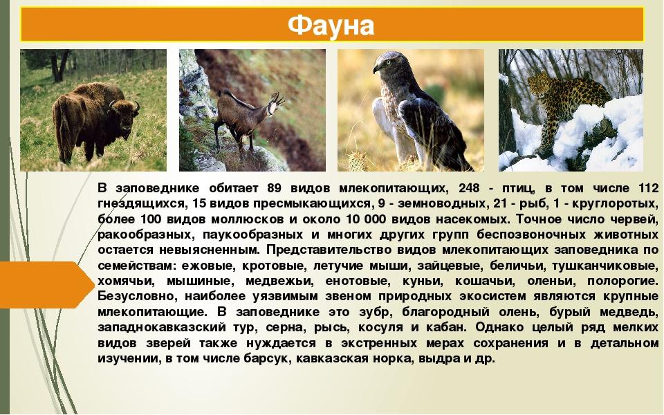 В заповеднике обитает 89 видов млекопитающих, 248 - птиц, в том числе 112 гне...