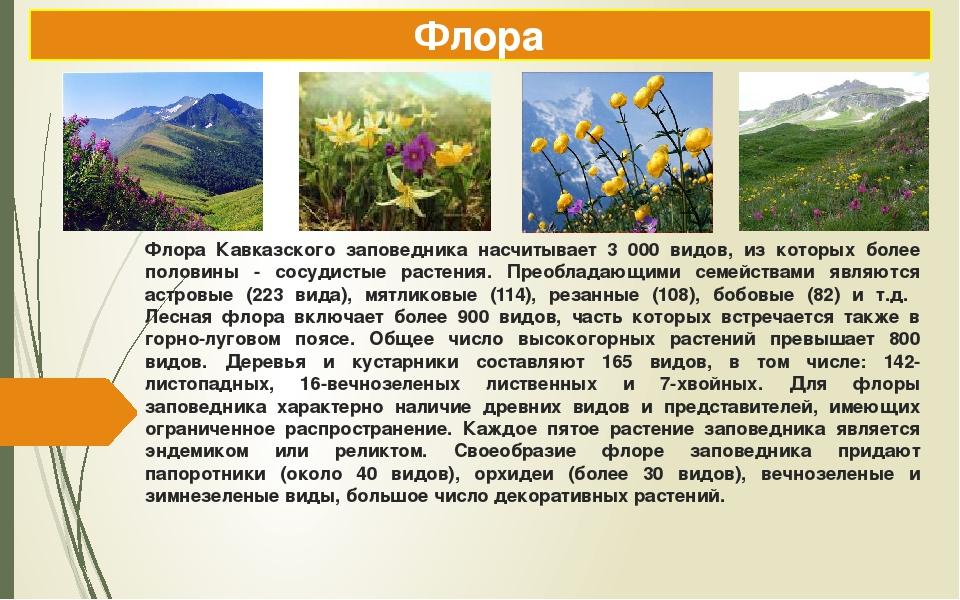 Флора Кавказского заповедника насчитывает 3 000 видов, из которых более полов...