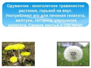 Одуванчик - многолетнее травянистое растение, горький на вкус. Употребляют ег