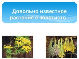 Довольно известное растение с золотисто - жёлтыми цветками. Используют внутр