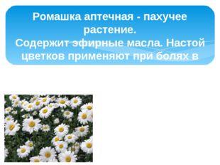 Ромашка аптечная - пахучее растение. Содержит эфирные масла. Настой цветков п