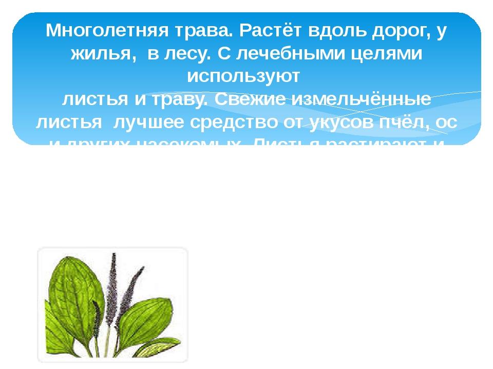 Многолетняя трава. Растёт вдоль дорог, у жилья, в лесу. С лечебными целями ис...