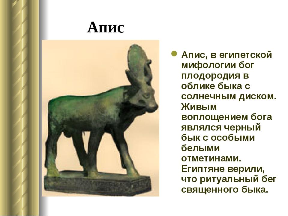 Апис Апис, в египетской мифологии бог плодородия в облике быка с солнечным ди...