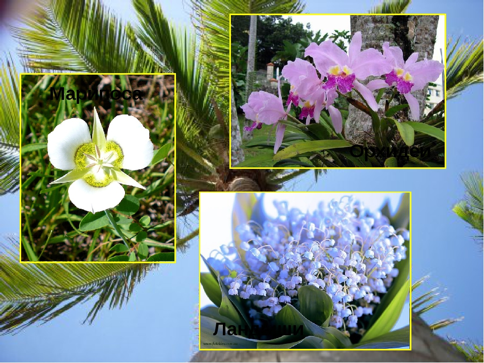 Марипоса Орхидеи Ландыши