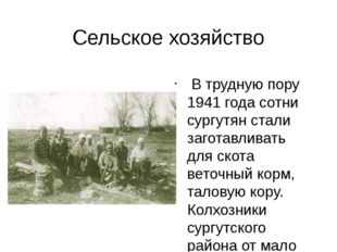 Сельское хозяйство В трудную пору 1941 года сотни сургутян стали заготавливат
