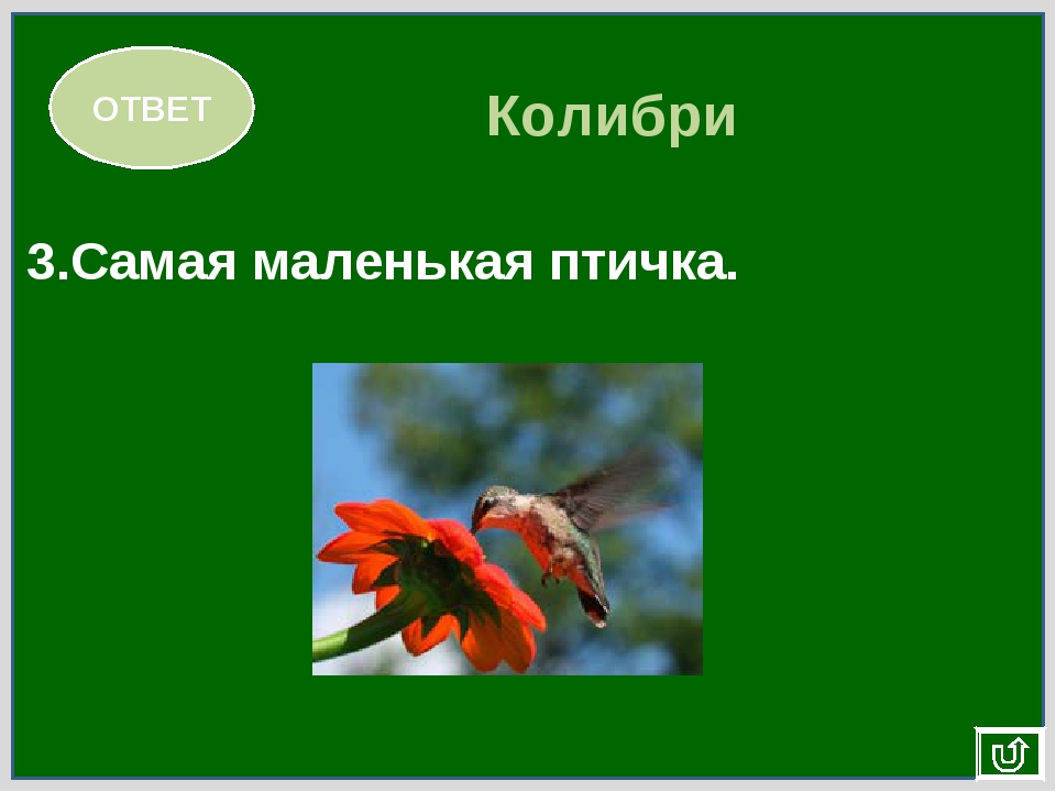 ОТВЕТ Колибри 3.Самая маленькая птичка.