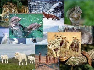 Её животный мир велик и разнообразен