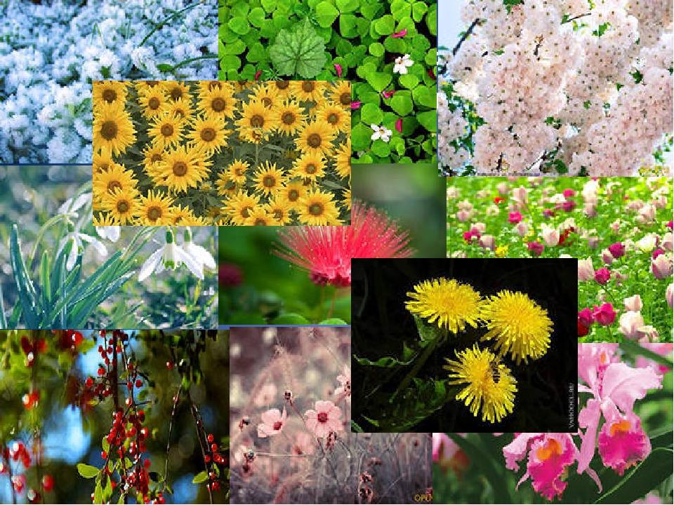 Её растительный мир богат и неповторим