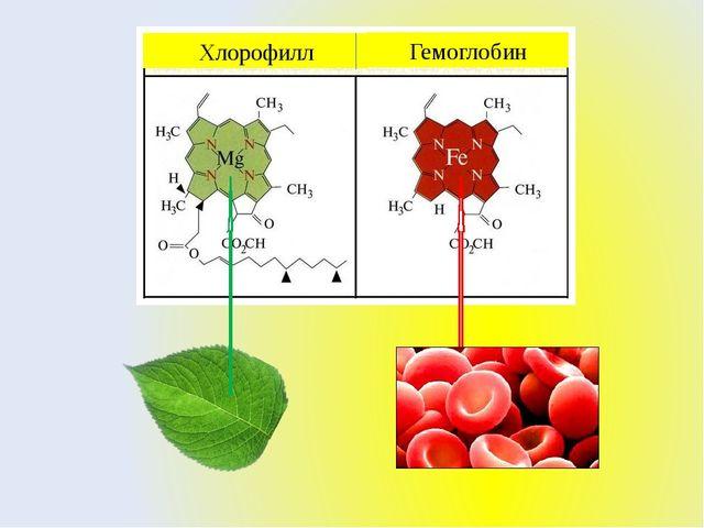 Хлорофилл Гемоглобин