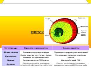 Клеточное ядро- это важнейшая часть клетки. Оно есть почти во всех клетках м