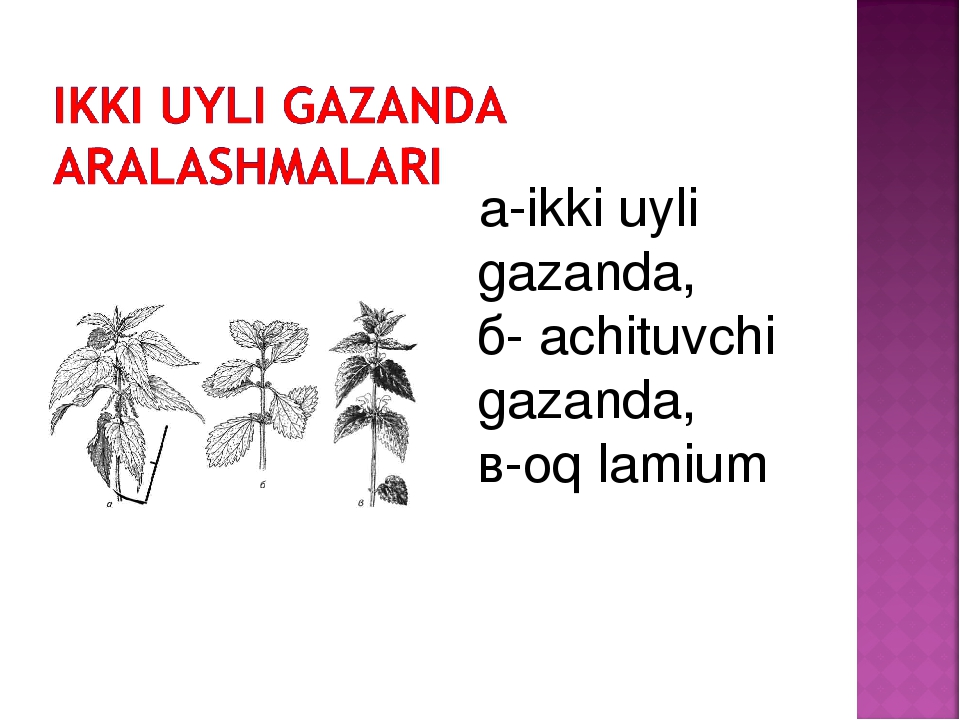 a-ikki uyli gazanda, б- achituvchi gazanda, в-oq lamium