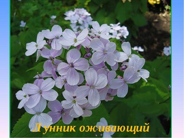 Выполните № 829 (б) Красная книга Калужской области Растения Лунник оживающий