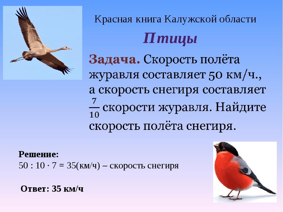Красная книга Калужской области Птицы Ответ: 35 км/ч Решение: 50 : 10 · 7 = 3...