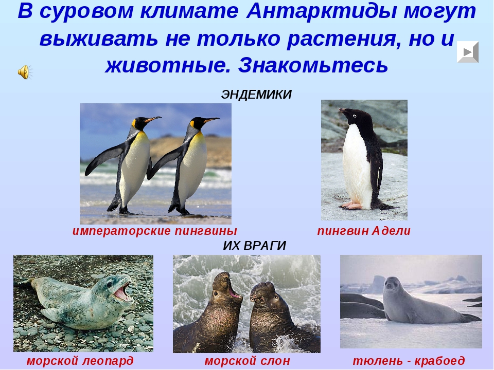 В суровом климате Антарктиды могут выживать не только растения, но и животные...