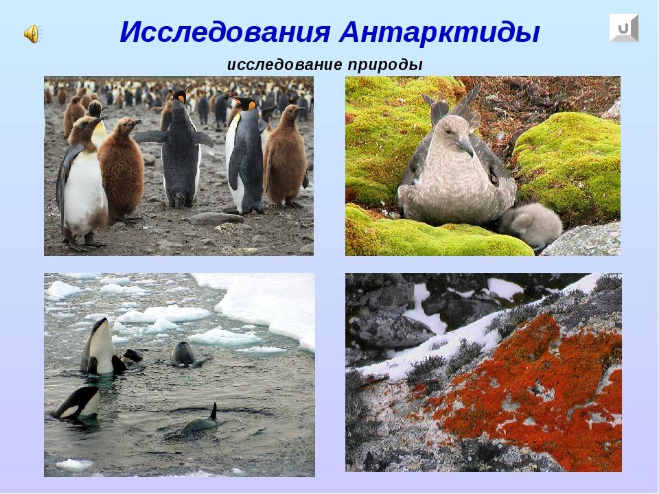 Исследования Антарктиды исследование природы