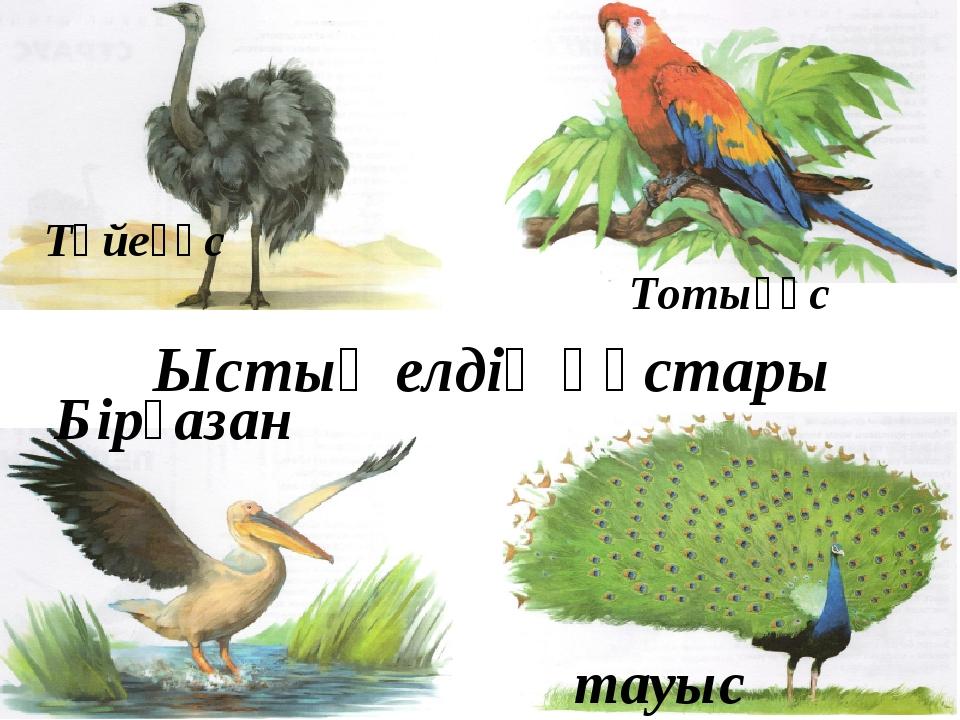 Түйеқұс Тотықұс тауыс Бірқазан Ыстық елдің құстары
