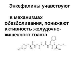 Энкефалины учавствуют  в механизмах обезболивания, понижают активность желуд